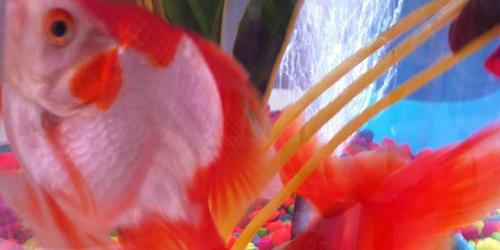 Name Steve's New Pet Fish – Competition - Steve Edge World - Steve Edge Design